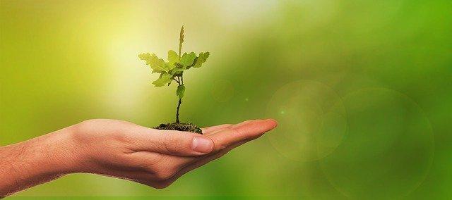 Plantez un arbre avec bunq pour 100 € dépensés